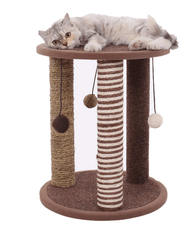 cat-activity-scratching-post