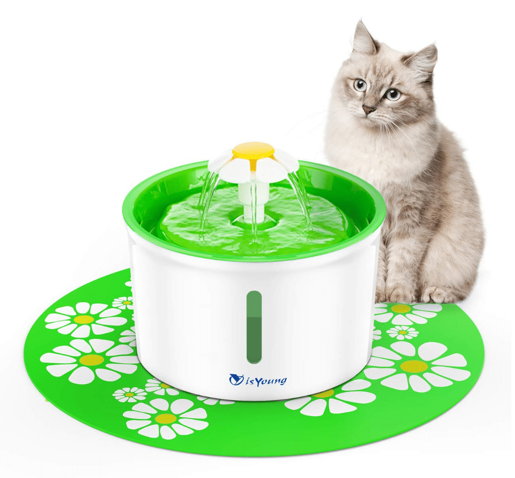 isYoung-cat-water-fountain