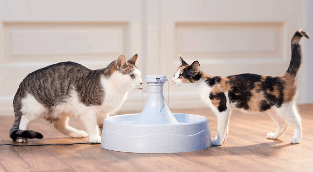 petsafe-drinkwell-360-cat-water-fountain