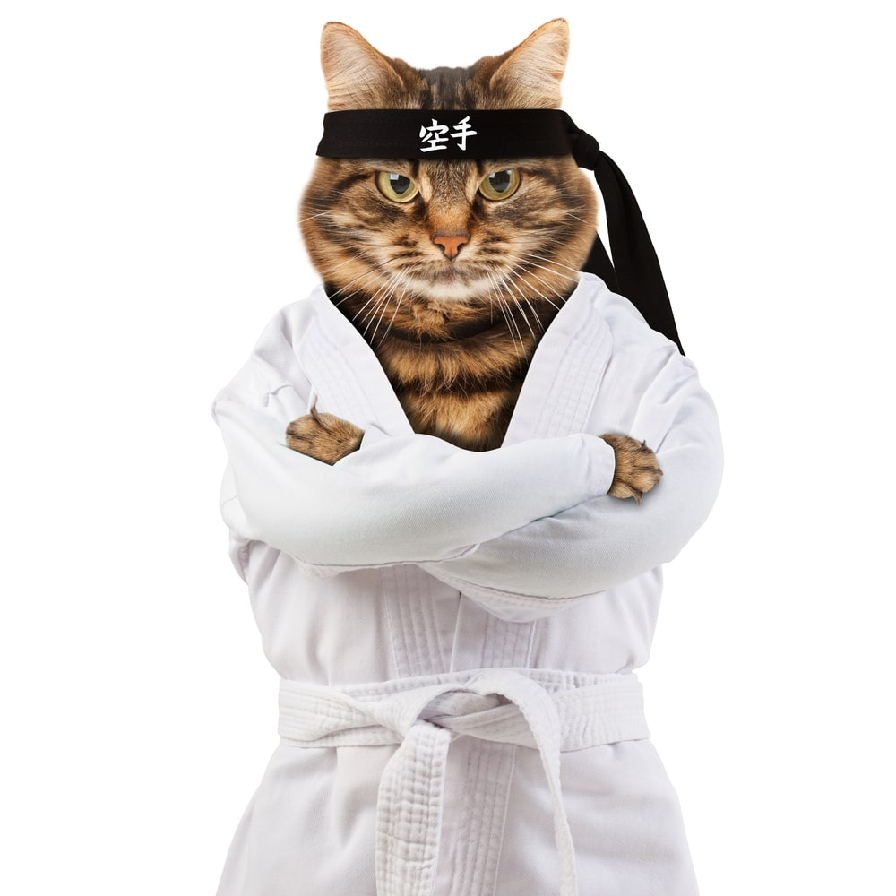 cat in a karate outfit