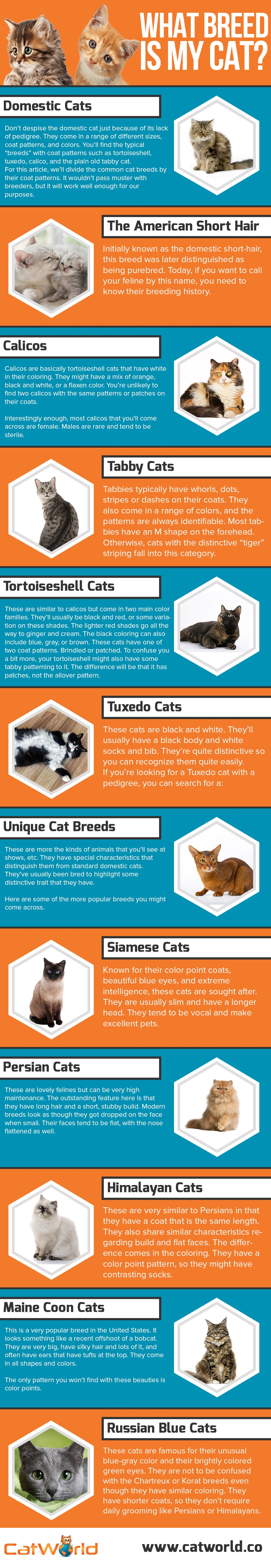 What breed is my cat info-graphic