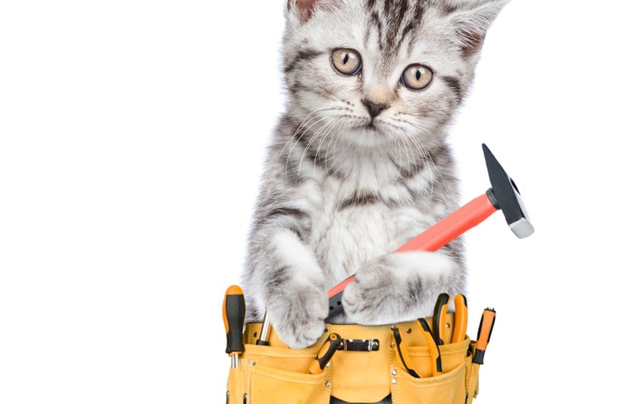 cat in a tool belt