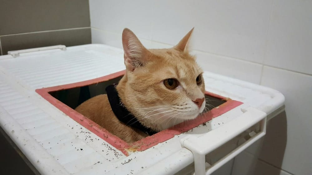 cat using a DIY litter box