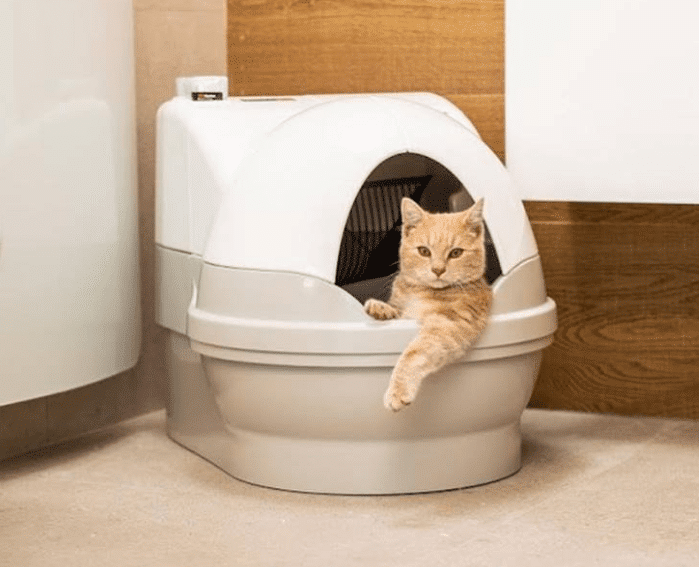 cat_going_to_the_bathroom_in_a_catgenie_self_cleaning_litter_box