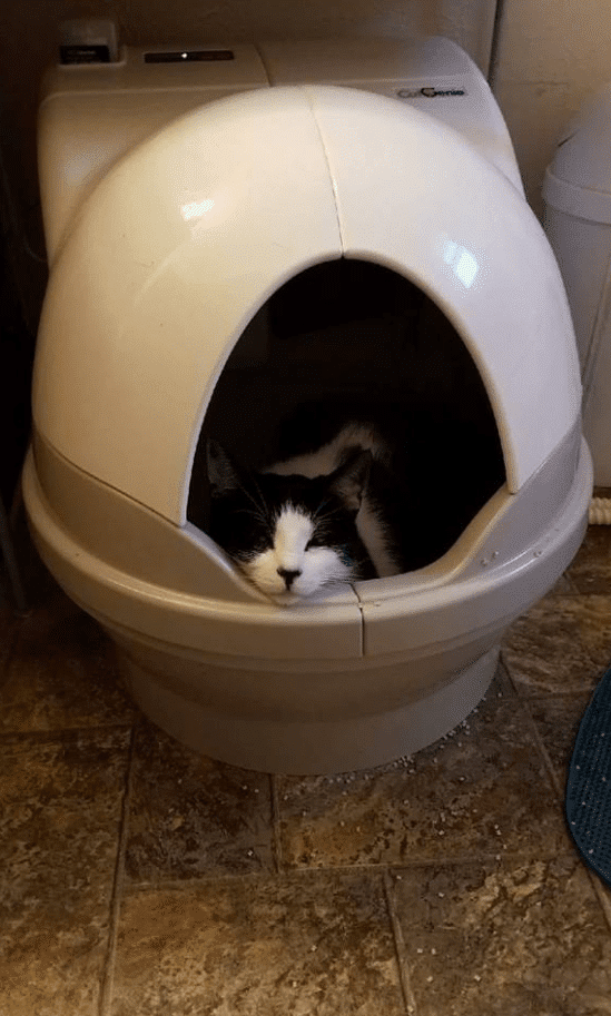 cat_using_the_catgenie_litter_box