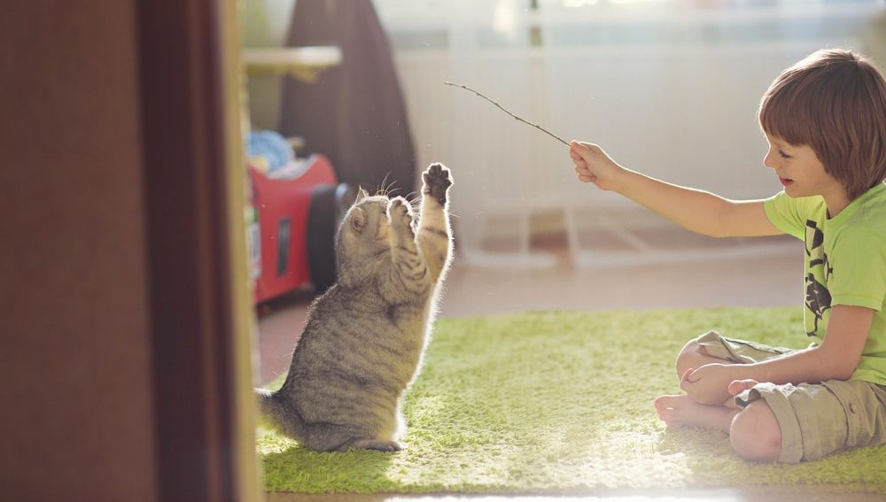 child playing with his cat