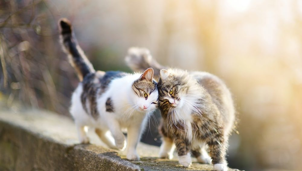 two friendly cats playing