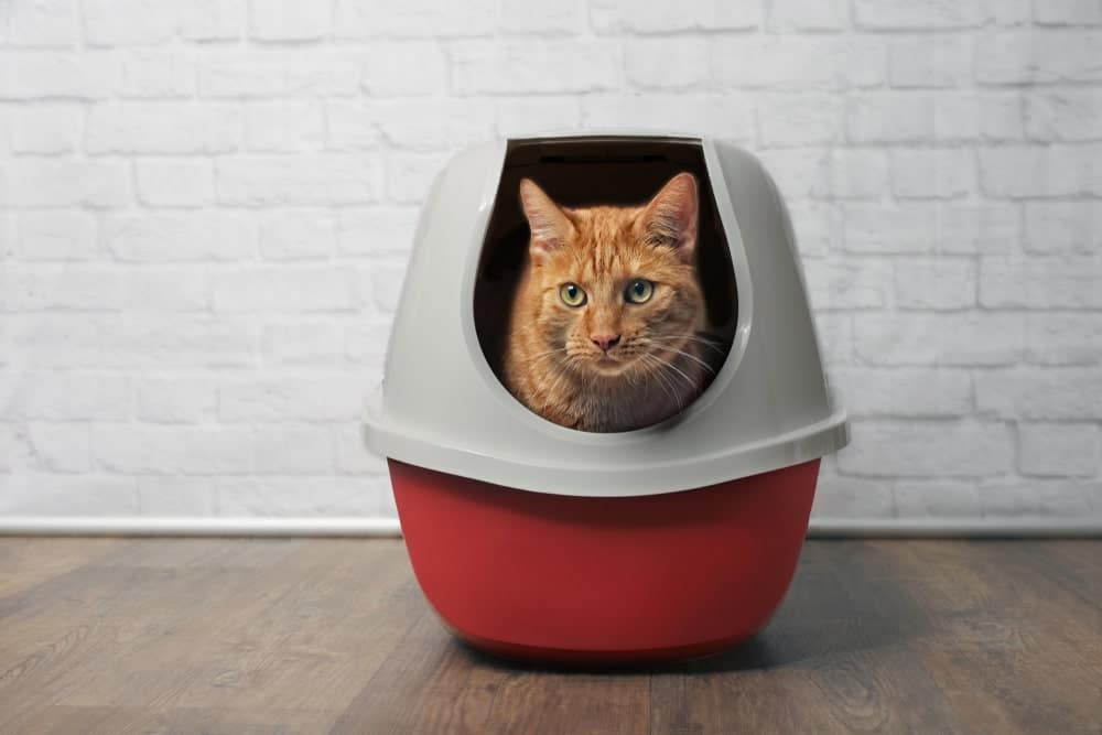 Open vs. Closed Litter Boxes - What's Better? | Cat World