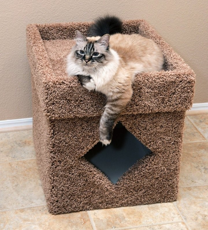 cat scratcher potty