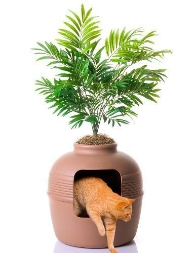 potted plant litter box