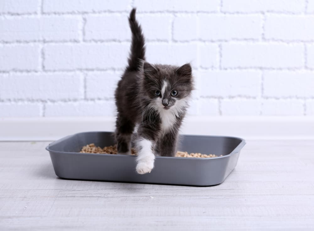 cat getting out of litter box
