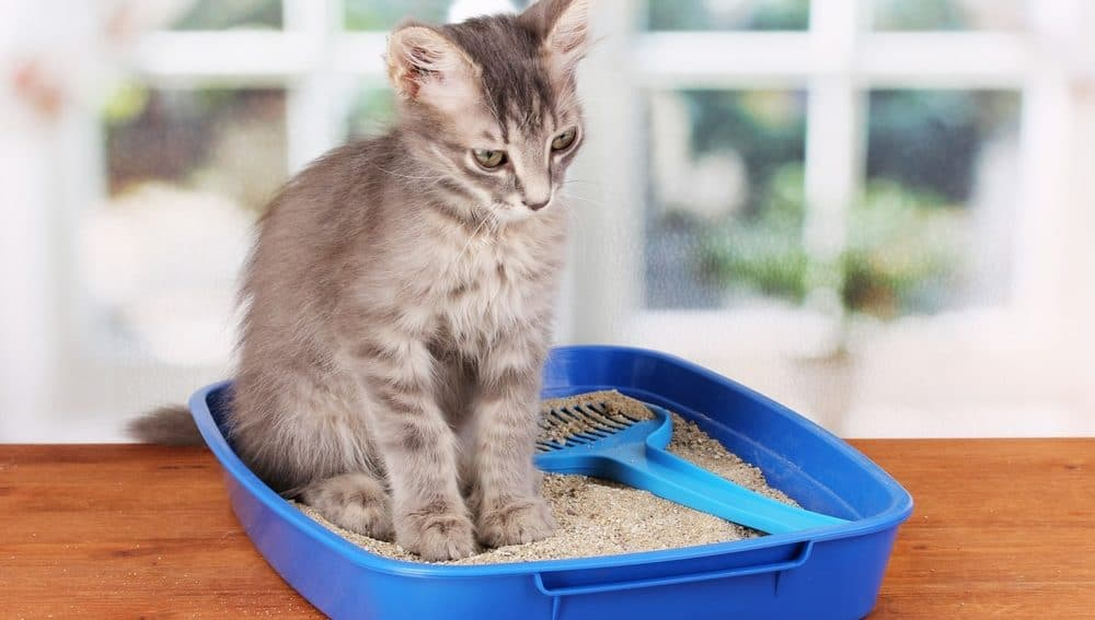 cat in the litter box with dustless litter