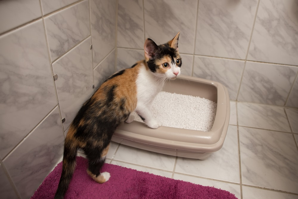 Where To Put A Litter Box In A Small Apartment | Litter Box ...