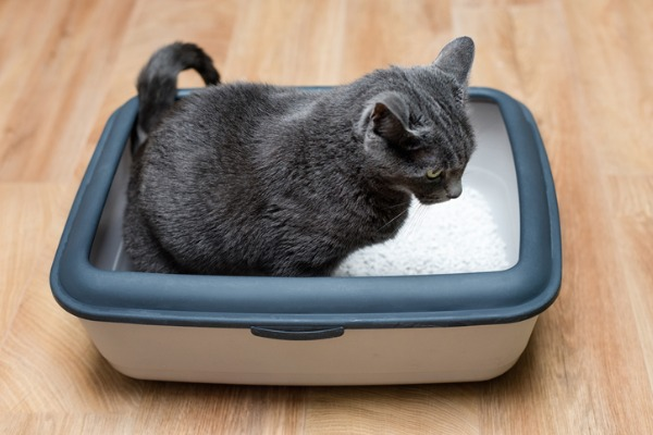 cat-using-litter-box-frequently
