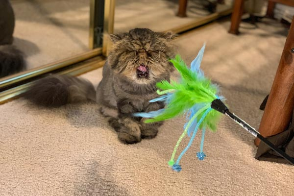 feather-teasing-cat-toy