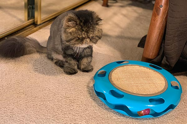 interactive-saucer-cat-toy