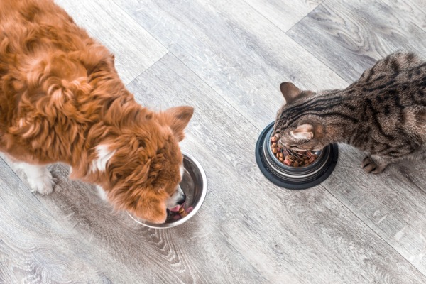 dog-food-vs-cat-food