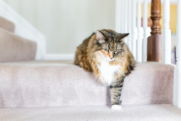 cat-cant-go-down-stairs