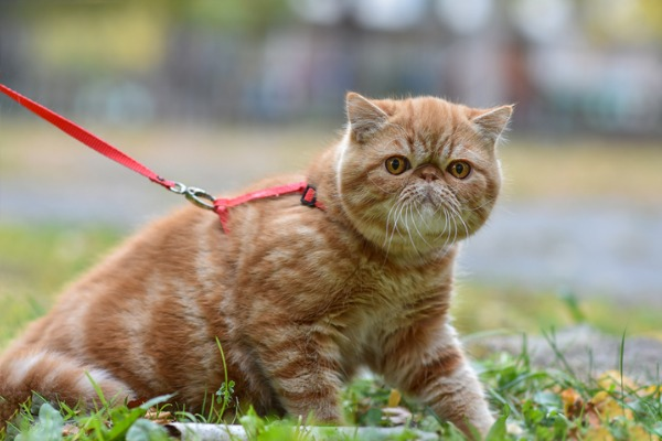 outdoor-cat-not-walking-well
